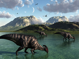 A Group of Parasaurolophus Dinosaurs Feed from a Freshwater Lake Photographic Print by  Stocktrek Images