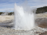 Plume Geyser Eruption, Upper Geyser Basin Geothermal Area, Yellowstone National Park, Wyoming Photographic Print by  Stocktrek Images