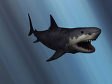 A Megalodon Shark from the Cenozoic Era Photographic Print by  Stocktrek Images
