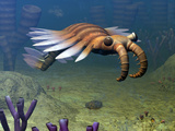 An Anomalocaris Explores a Middle Cambrian Age Ocean Floor Photographic Print by  Stocktrek Images