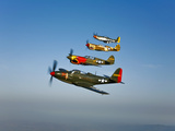 A P-36 Kingcobra, Two Curtiss P-40N Warhawks, and a P-51D Mustang in Flight Photographic Print by  Stocktrek Images
