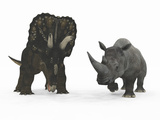 An Adult Nedoceratops Compared to a Modern Adult White Rhinoceros Photographic Print by  Stocktrek Images
