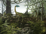 Coelophysis Dinosaurs Walk Amongst a Forest Photographic Print by  Stocktrek Images