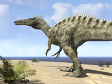 A Carnivorous Suchomimus Wanders a Beach on the Ancient Tethys Ocean Photographie par  Stocktrek Images