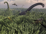 Diplodocus Dinosaurs of the Sauropod Family Stampa fotografica di Stocktrek Images