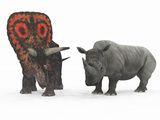 An Adult Torosaurus Compared to a Modern Adult White Rhinoceros Photographic Print by  Stocktrek Images