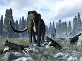 A Pack of Dire Wolves Crosses Paths with Two Mammoths During the Upper Pleistocene Epoch Photographie par  Stocktrek Images