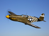 A P-51A Mustang in Flight Photographic Print by  Stocktrek Images
