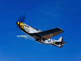 A P-51D Mustang Kimberly Kaye in Flight Photographic Print by  Stocktrek Images