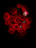 A Bouquet of Red Roses Photographic Print by Kenneth Ginn