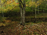 Autumn Foliage in Acadia National Park Photographic Print by Raul Touzon