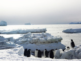 Adelie Penguins, Pygoscelis Adeliae, Standing at the Water's Edge Photographic Print by Steve And Donna O'Meara