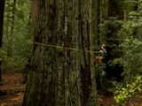 The Patriarch Grove Has the Largest Volume of Redwood Trees Photographic Print by National Geographic Photographer