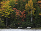 Trees Along the Coastline in Autumn Photographic Print by Raul Touzon