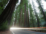 Logging Trucks on Highway 101 Through Richardson Grove State Park Photographic Print by National Geographic Photographer