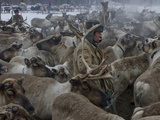 Komi Reindeer Herders Capture Reindeer to Pull their Sleds Photographic Print by Gordon Wiltsie