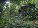An Abandoned Taro Farmer's Shack in a Lush Rain Forest on Molokai Fotografiskt tryck av Pete Ryan
