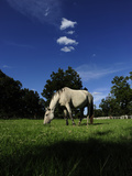 A Horse at a Horse Ranch Photographic Print by Raul Touzon