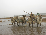 A Nomadic Komi Reindeer Herder Drives Through a Pool on Permafrost Photographic Print by Gordon Wiltsie
