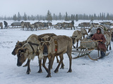 Komi Herding Clan Matriarch Prepares to Drive a Train of Sleds Photographic Print by Gordon Wiltsie