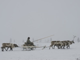 A Komi Reindeer-Herder on the Tundra in Heavy Whiteout Fog Photographic Print by Gordon Wiltsie
