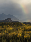 Fall at Riley Creek, Denali National Park , Alaska Photographic Print by Michael S. Quinton