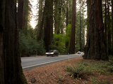 Highway 101 Narrows to Two Lanes Through Richardson Grove State Park Photographic Print by National Geographic Photographer