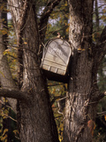 A Mailbox Stuck Between the Branches of a Tree Photographic Print by Paul Daimien