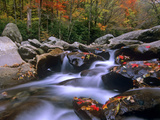 Little Pigeon River Among Rocks and Maple Leaves, Great Smoky Mountains Nat'l Park, Tennessee Photographic Print by Tim Fitzharris/Minden Pictures
