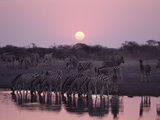 Zebra (Equus Burchellii) at Waterhole During Sunset, Etosha National Park, Namibia Fotografie-Druck von Michael and Patricia Fogden/Minden Pictures