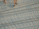 Vehicle Tracks and People's Feet on the Beach Photographic Print by National Geographic Photographer