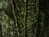 Close Up of a Tree Trunk in a Rain Forest Photographic Print by Raul Touzon