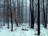 An Early Winter Forest Scene in Eastern Ontario Photographic Print by Kenneth Ginn