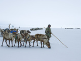 Caravan Leader of the Komi Reindeer Herders Looks for the Best Route Photographic Print by Gordon Wiltsie