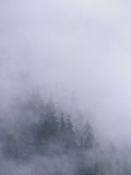 Coastal Temperate Rainforest in Clouds, Anan Creek, Alaska Photographic Print by Matthias Breiter/Minden Pictures