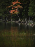 A Tree with Fall Foliage Reflected in Eagle Lake Photographic Print by Raul Touzon