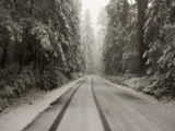 A Rare Snow Blankets Del Norte Redwoods State Park Photographic Print by Michael Nichols
