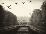 Ducks Fly Along the Canal in Front of Paterhof Photographic Print by  Keenpress