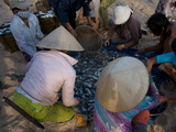 Fishermen Sort Through their Catch on the Beach in Mui Ne, Vietnam Photographic Print by Kris Leboutillier
