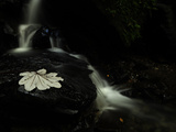 A Waterfall in a Rain Forest Photographic Print by Raul Touzon