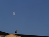 The Moon Above a Building with a Bird on It Photographic Print by Raul Touzon