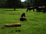 Horses at a Horse Ranch Photographic Print by Raul Touzon