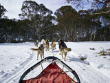 A Team of Siberian Husky Sled Dogs Pull a Sled Through Alpine Snow Photographic Print by Jason Edwards