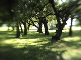 Sunlight Filters Through Branches in an Oak Forest Photographic Print by Raul Touzon