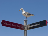 Gull Atop a Restroom Sign, Relieving Itsefl Photographic Print by Charles Kogod