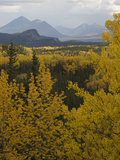 Fall Aspens at Riley Creek, Denali National Park , Alaska Photographic Print by Michael S. Quinton