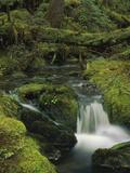 Creek in Coastal Rainforest Along Eyak Lake, Cordova, Alaska Photographic Print by Matthias Breiter/Minden Pictures