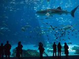 Visitors at the Georgia Aquarium in Atlanta Photographic Print by Krista Rossow