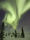 Northern Lights or Aurora Borealis over Frozen Tundra, Boreal Forest, North America Photographic Print by Matthias Breiter/Minden Pictures