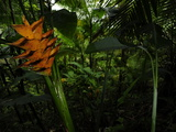 An Orange Flower Among Green Vegetation Photographic Print by Raul Touzon